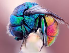An crooked insect in rainbow colors