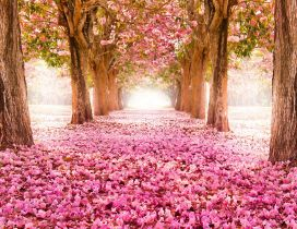Blooming trees and many pink flowers