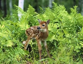 A sweet baby deer in the grass in forest