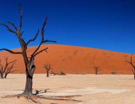 Dry trees in the sand of desert - Blue sky
