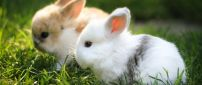 Cute white and brown bunnies in the green grass
