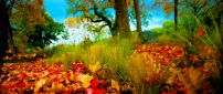 Autumn leaves on the field - beautiful nature wallpaper