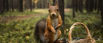 A squirrel with a basket in the forest