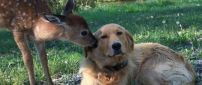 A dog and a deer - Love moment