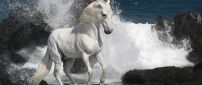 Beautiful white horse beside the rocks in the water