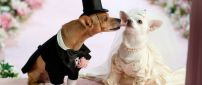Wedding between puppies - Cute animals