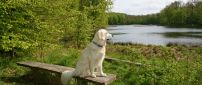 White dog sits on a bench near the river