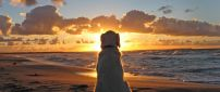A old dog sits on the beach in the sunset