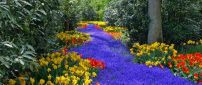 Beautiful colorful flowers - Relaxing nature in the park