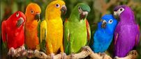 Six parrots in different colors on the branch