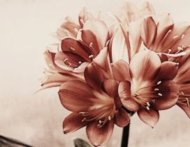Beautiful vintage red flowers - HD wallpaper