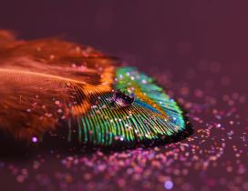 A drop of water on a colorful feather