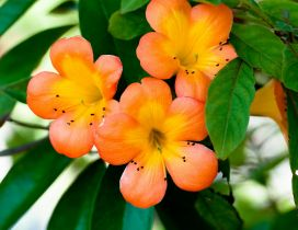 Beautiful orange flowers on the branch