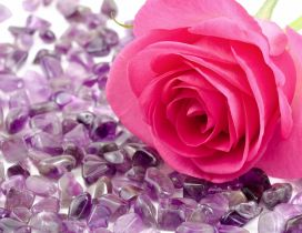 Pink rose on the many beautiful purple stones