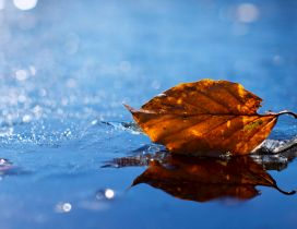 A yellowed leaf on the water - HD wallpaper