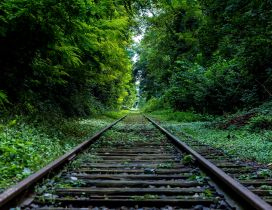 A railroad through the green forest