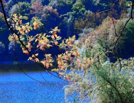 Branches with colorful leaves on the shore of river