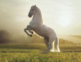 A beautiful white horse on the field in the sunlight