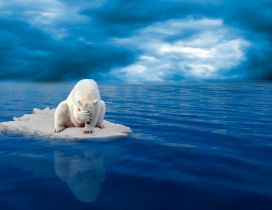 Sad polar bear on ice in the middle of sea