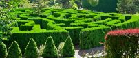 Botanical Garden - Green maze in the garden