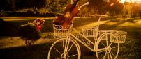 White bicycle with a violin in the basket on the grass
