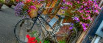 Many beautiful and colorful flowers in a basket of bicycle