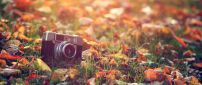 A camera photo between the dry leaves in the grass