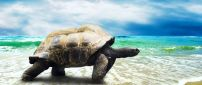 A big turtle on the beach in the sea waves