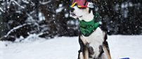 Funny dog with ski goggles and scarf - Cool dog