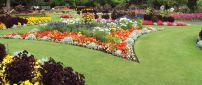 An amazing garden with many colorful flowers