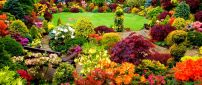 Beautiful backyard garden - Colorful garden