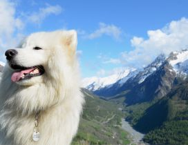 Beautiful white dog in mountains - Fluffy dog