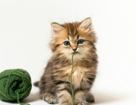 Gray cute kitty with a green clew