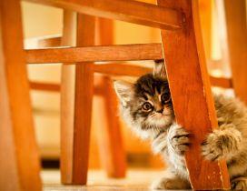 Cute little gray kitty hiding - Sweet animal