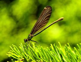 Amazing dragonfly on the green grass