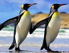 Beautiful penguins couple on the beach