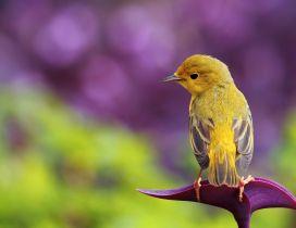 A sweet yellow little bird on the purple flower
