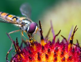 A beautiful yellow and purple insect on a flower