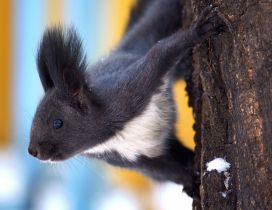 Cute black and white squirrel on a tree
