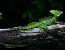 A green reptile on a wood - Scary animal