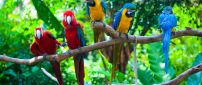 Many colorful parrots on a tree branch