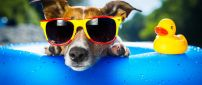 A dog with yellow and red glasses in a pool