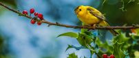 A sweet little yellow bird on branch