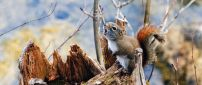 A little squirrel on a branch - Small animal