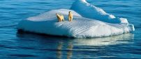 Two polar bears on the ice island in the middle of sea