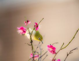 A green little bird on a branch with pink flowers