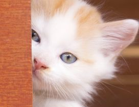 Sweet white kitty - Beautiful kitty eyes