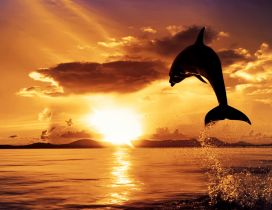 A dolphin in the air in light of sunset
