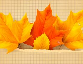 Three yellow and orange leaves - Autumn time