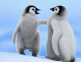 Very cute white penguins with black head